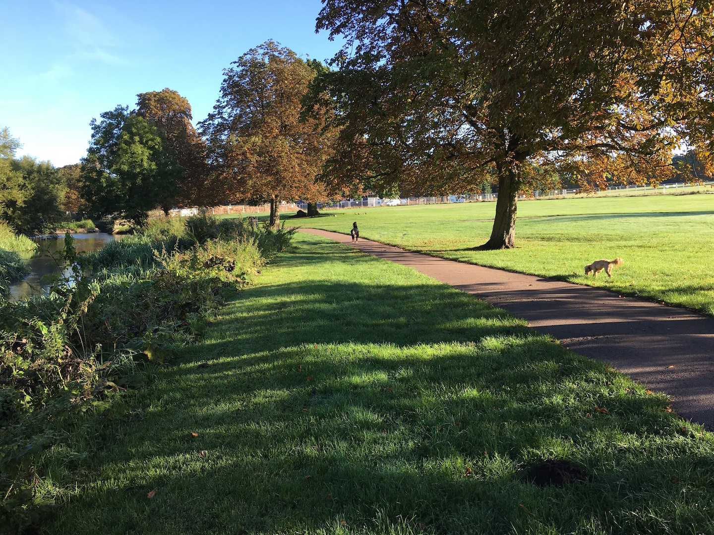 One thing I can enjoy without fail, however, is walking my dogs in the Autumnal morning sunshine